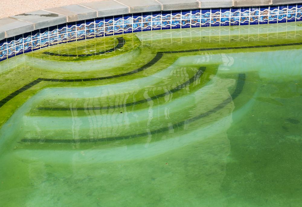 Algae – What Is It?